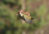 Was This Weasel On Back of Woodpecker Photo-shopped?