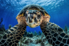 Learn From The Self-Isolating Sea Turtle