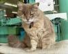 4 Steps To Tame A Feral Cat Petslady Com